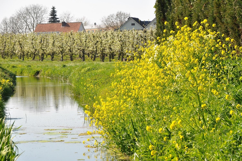 leefomgeving groen, afbeelding van beek met gele bloemen en bloeiende fruitbomen