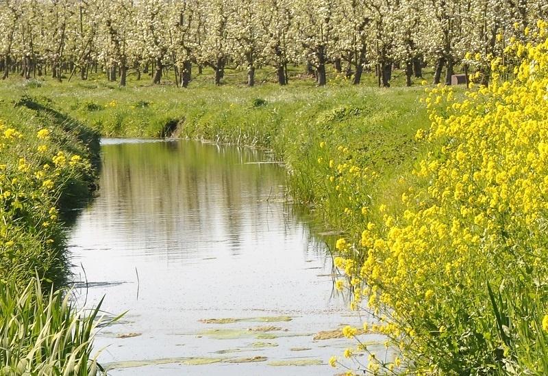 leefomgeving groen beek met boomgaard en bloeiende oever